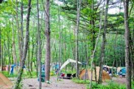 自然を満喫できる林間のキャンプフィールド