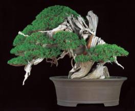 第8回世界盆栽大会inさいたま記念開催 「日本の盆栽水石至宝展」