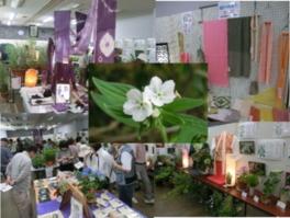 紫草(むらさき)と万葉の花展