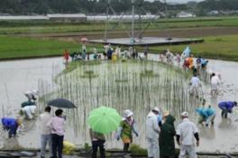 田んぼアートin菊川 田植祭