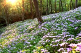 春の岳人の森まつり