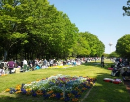 所沢市「所沢航空記念公園」フリーマーケット(4月)
