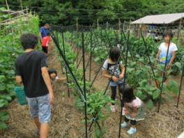 兵庫県立なか・やちよの森公園 夏野菜カレーづくり