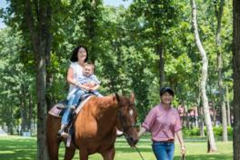 観光ひき馬