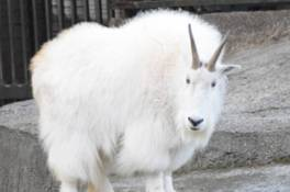 金沢動物園開園35周年記念 アメリカまつり