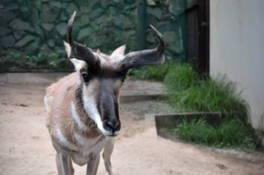 金沢動物園 アメリカ区特別ガイド