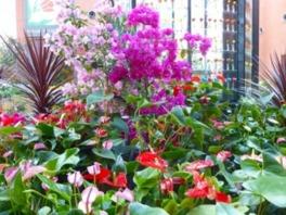 チューリップ四季彩館常設展示「季節を彩る花々」~夏の色~