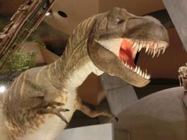 迫力のあるティラノサウルスの模型
