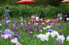 平川動物公園花しょうぶまつり