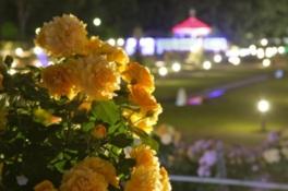 敷島公園ばら園 「ばら園まつり」