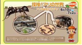 探検!アリの世界 ~アリの秘密ここにアリ~