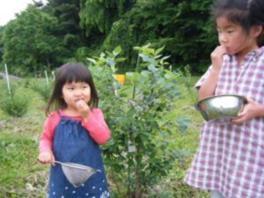 長野県安曇野 無農薬栽培のブルーベリー狩り