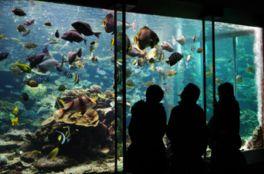 串本の海中を再現した大水槽