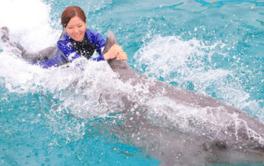 イルカの背びれに掴まって泳ぐことも