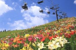 びわこ箱館山ゆり園 開園