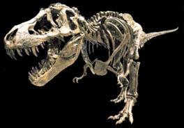 成羽地域が有数の化石産地であることを学ぶことができる