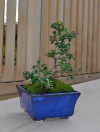 盆器をつくって盆栽をはじめよう(夏休みワークショップ5~8)