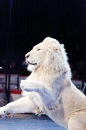 ホワイトライオンなどの猛獣ショーも