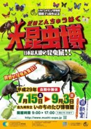 夏の特別展「大昆虫博」