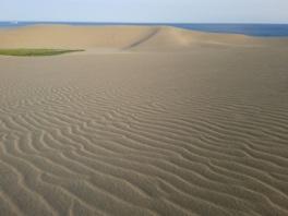 砂の表面に波打つように描かれる風紋