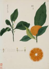 慶賀や他の絵師によるおよそ1000点の植物図はシーボルトの死後ロシアに渡った