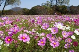 公園を華やかに彩る秋の草花を満喫できる