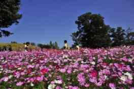 爽やかな秋の1日を、花を眺めながらのんびり過ごせる