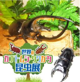 「世界のカブトムシ・クワガタ昆虫展」は8月27日(日)まで