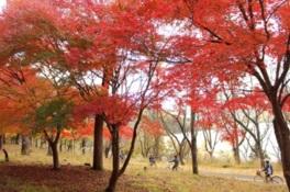 色づいた木々を眺めながらのサイクリングは格別