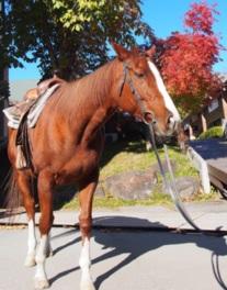 馬に揺られて楽しくおさんぽ