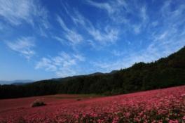 背景には山の緑も広がり、ピンクの花とのコントラストが美しい