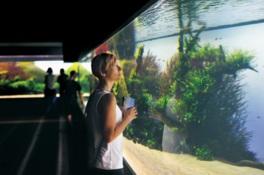 リスボン海洋水族館にある世界最大のネイチャーアクアリウム