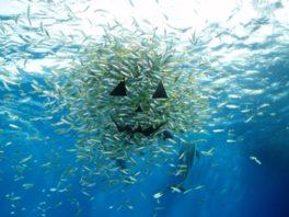 魚の群れがカボチャの形を作り上げる「タカベのハロウィンファンタジー」も実施