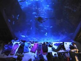 2万匹の魚が泳ぐ大水槽前で朝まで過ごせる