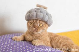 猫たちのかわいらしい姿にほっこり癒やされる
