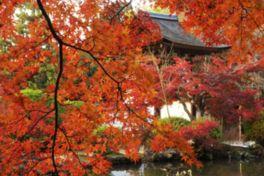 真っ赤に染まる美しい紅葉に囲まれた長岳寺