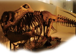 恐竜研究を通して、地球の歴史を感じることもできる