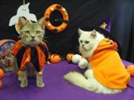 ハロウィン衣装の猫たちと写真撮影やふれあいが楽しめる