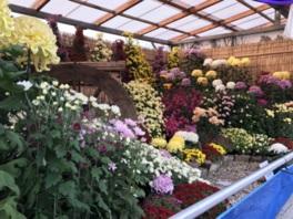 見事に咲き誇る競技花や造形菊が並ぶ