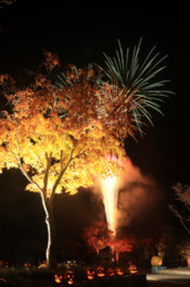 美しい紅葉の中打ち上がる花火