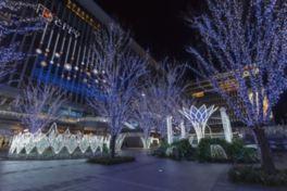 博多駅前が華やかなイルミネーションで彩られる