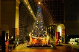 22mの巨大クリスマスツリーと音楽でクリスマス気分を満喫