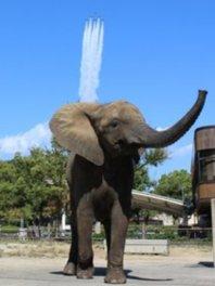 動物園のアイドル媛ちゃんの健やかな成長をお祝いする