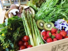 会場には東京都内で育った色とりどりの新鮮野菜が並ぶ