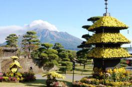 菊花三重塔と桜島を望む撮影スポットも
