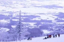 ニセコいわない国際スキー場