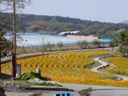 園内は季節の花でいっぱい。5月はポピーが見頃