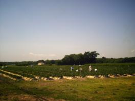 北海道らしい広大な畑が広がる