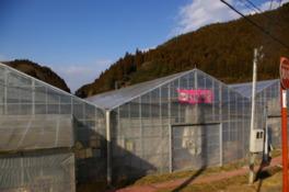 田人観光いちご園