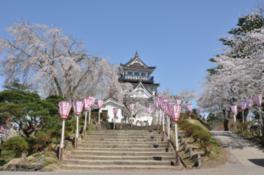 【桜・見頃】横手公園